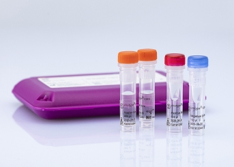 virotype CSFV RT-PCR Kit